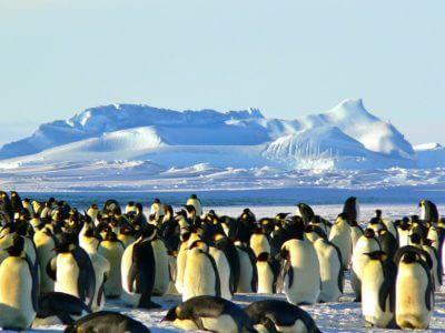 Tučňáci - kolonie